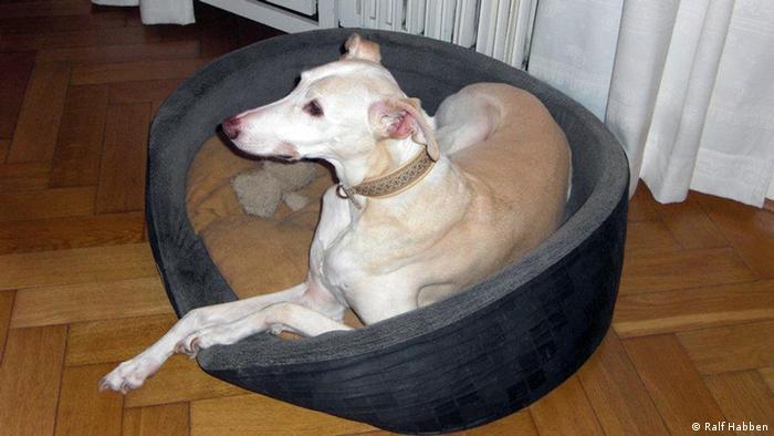 El perro Tino sufrió maltratos en España. Hoy vive en un hogar en Bremen, Alemania.