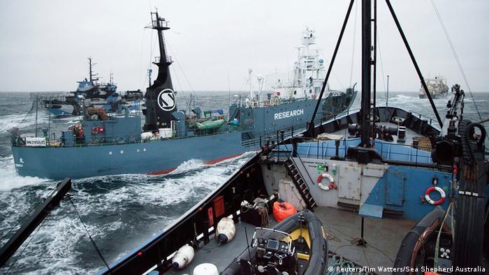 Das japanische Fangschiff Yushin Maru kollidiert fast mit dem Schiff Steve Irwin (im Vordergrund) der Umweltschutzorganisation Sea Shepherd (Foto: Reuters)