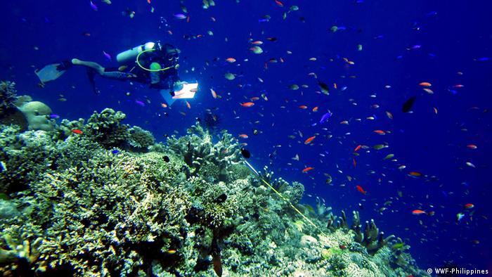 Divers at coral reef