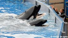 USA SeaWorld in Orlando Wahl