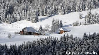 Floresta Nehgra coberta de neve