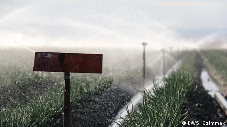 California irrigation system