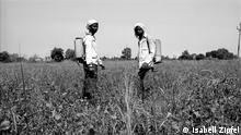 Fotografin & Copyright: Isabell Zipfel (2013) *** Achtung: Bild nur für die Bildergalerie Indien BT Baumwolle verwenden! Bildunterschrift: Auf einem Baumwollfeld im indischen Staat Maharashtra sprühen zwei Männer das Pestizid Round-up.
