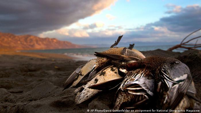 Jagd auf Zugvögel in Albanien