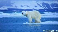 #46687575 - Polar bear © st__iv Svalbard; Norway; Spitsbergen; arctic; winter; north; animals; animal; snow; ice; ice floe; wildlife; weather; bear; beast; arctic; predator; polar bear; ecology; hunter; balance; environment; mammal; carnivore; ursus maritimus; northern; churchill; manitoba; endangered species; climate change; global warming; rule of thirds; ecosystem; marine mammal; greenhouse; gases; beasts; wintertime; precipitation; ursidae; endangered animal; greenhouse effect; white; blue; sun; sunny; polar bear; arctic; wildlife; animal; norway; animals; svalbard; predator; spitsbergen; winter; north; snow; ice; ice floe; weather; bear; beast; ecology; hunter; balance; environment; mammal; carnivore; ursus maritimus; northern; churchill; manitoba; endangered species; climate change; global warming; ecosystem; marine mammal; greenhouse; gases; beasts; wintertime; precipitation; ursidae; endangered animal; greenhouse effect; white; blue; sun; sunny
