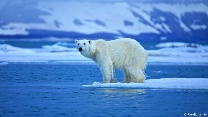 Temperatur am Nordpol bis zu 30 Grad Celsius über normal