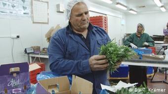 Landwirt Arie Shahar exportiert seine Kräuter nach Europa (Foto: DW/Krämer)