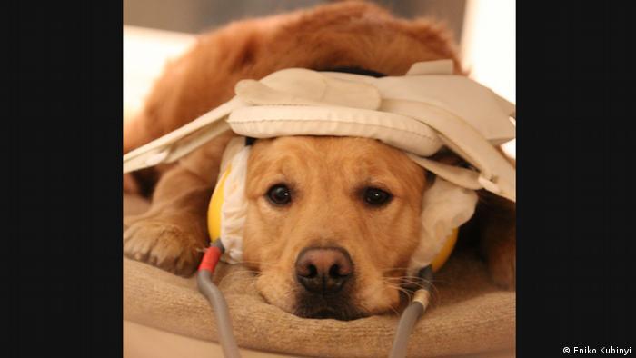 Hunde im MRT