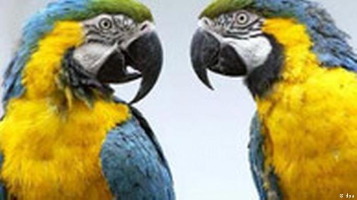 Tratschende Papageien