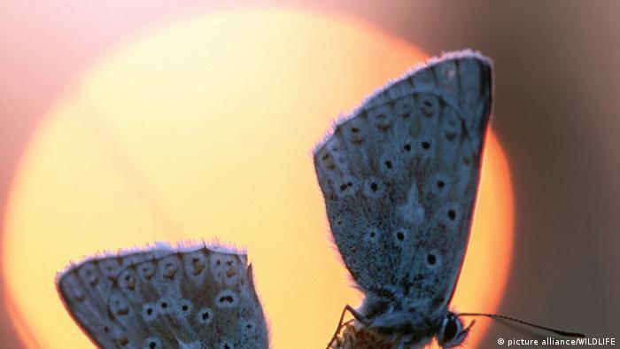 Schmetterling vor aufgehender Sonne