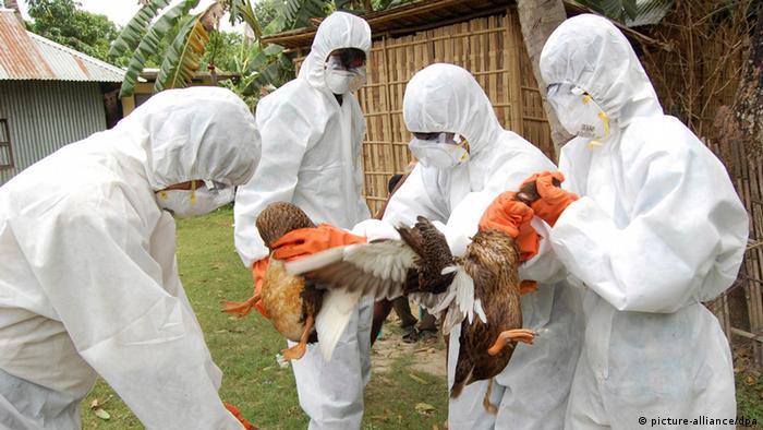 Symbolbild Vogelgrippe Bangladesh (picture-alliance/dpa)