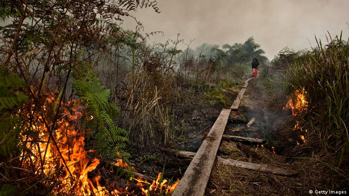How ′El Niño′ affects Indonesian forest fires | Asia | DW ...