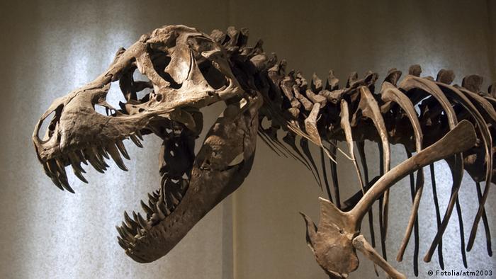 Tyrannosaurus Rex Skeletton