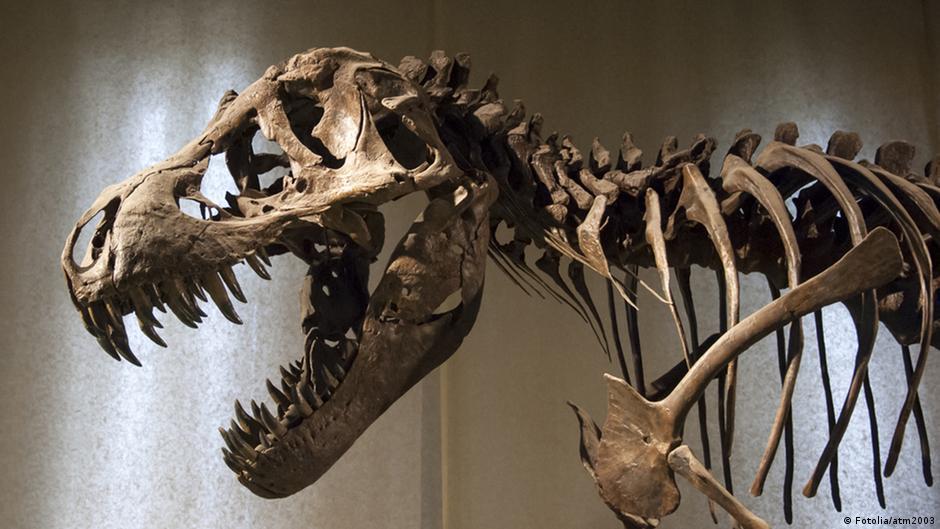 اكتشاف حفرية أضخم ديناصور عاش في أوروبا منوعات نافذة Dw عربية على حياة المشاهير والأحداث الطريفة Dw 06 03 2014