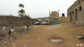 Goats on a sandy road leading to a religious school in Bauchi