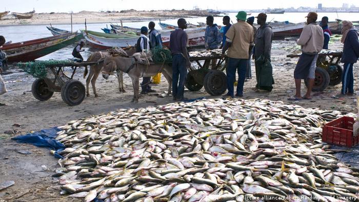 Fischverkäufer in Nouadhibou, Mauretanien