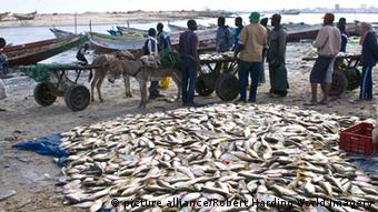 Fish sellers in Mauritania