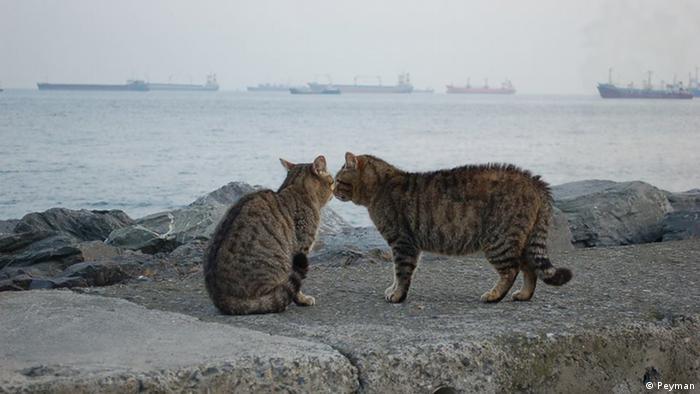 Bildergalerie Katzen in Istanbul (Peyman)