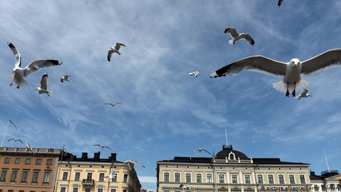 Seagulls fly in the Helsinki Harbor