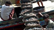 Pakistani fishermen unload baskets full of fish at the harbor in Karachi Sunday 21 November 2004. All over the world fishermen observe 21st of November as World Fisheries Day. EPA/AKHTAR SOOMRO +++(c) dpa - Report+++