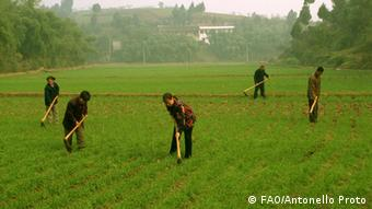 Family Farming China