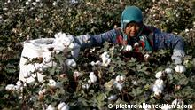 A woman picks cotton flowers in Hami in northwest China's Xinjiang Uygur Autonomous Region Tuesday Sept. 20, 2011. Hundreds of thousands of migrant workers move to Xinjiang each Autumn to harvest the cotton. Photo via Newscom picture alliance