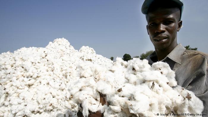Baumwollernte in Elfenbeinküste