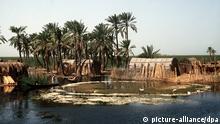 Blick aus Hütten aus Schilfrohr auf einer kleinen Insel im Marschland zwischen Euphrat und Tigris, undatiert.