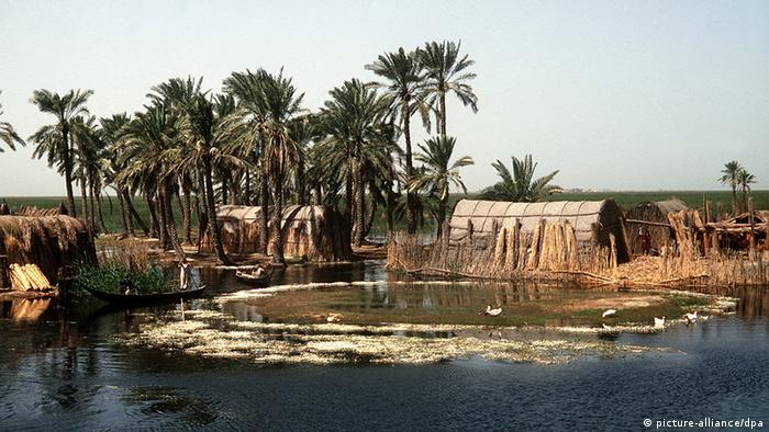 تعاني حقول النخيل العراقية حتى يومنا هذا من التخريب بسبب الزحف العمراني والتوسع في إنتاج النفط