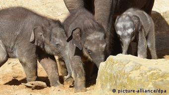 Small elephants in an enclosure (Photo: Holger Hollemann/dpa)