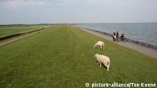 Deich in den Niederlanden (picture-alliance/Ton Koene)