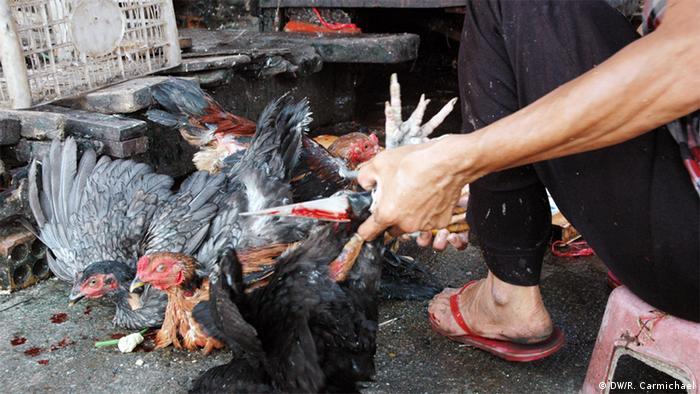 A person manhandles a chicken