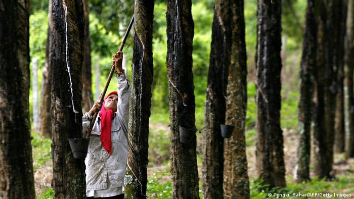 Kautschuk Plantage in Malaysia Sepang