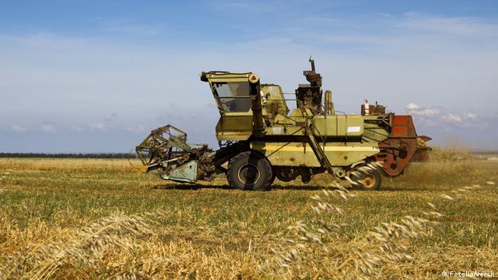 Пітримка малих господарств потрібна, щоб забезпечити зайнятість у сільській місцевості, яку не можуть дати великі холдинги, констатують експерти