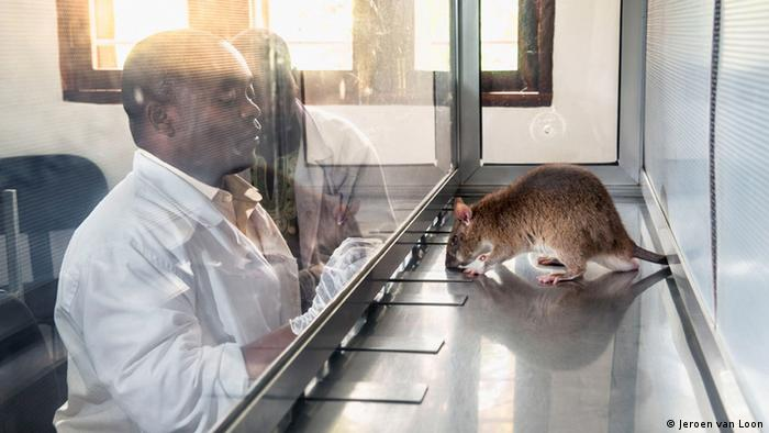 Rat with scientist