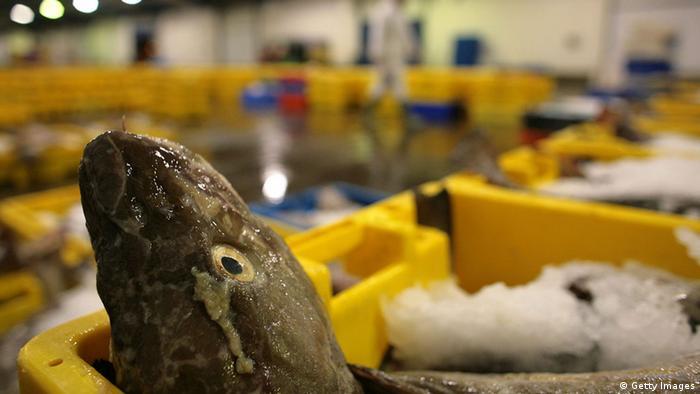 Deutschland Fischhandel Symbolbild