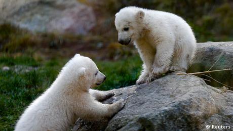 Eisbären Nachwuchs Münchener Zoo 07.04.2014