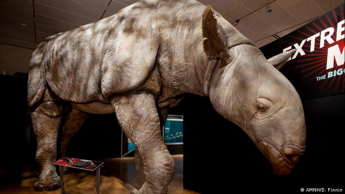 Indricotherium (Photo: AMNH/D. Finnin)