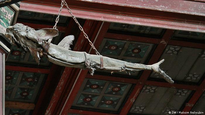 Сушеная акула в храме Николая Чудотворца в Штральзунде