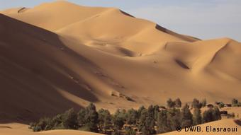 A small forest with sand dunes in the background