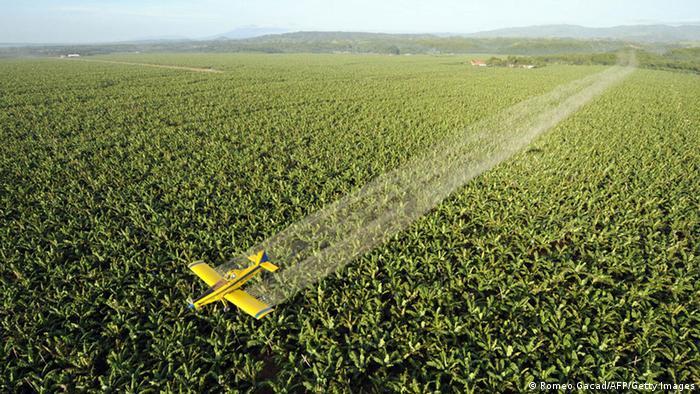 Luftaufnahme eines Bananen-Feldes, über das ein kleines Flugzeug fliegt (Foto: Romeo Gacad/AFP/Getty Images).