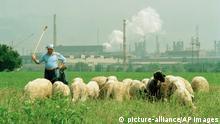 Schäfer mit Schafherde vor dampfenden Schloten, Bulgarien