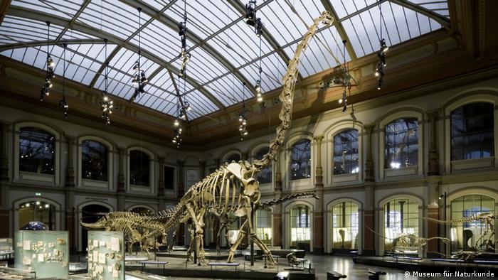 Brachiosaurus Skelett (Foto: Museum für Naturkunde Berlin); nur im Zusammenhang mit der Bildergalerie Aus sie noch über die Erde streiften... verwenden