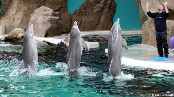 Duisburg Zoo dolphin show (Rainer Dückerhoff)