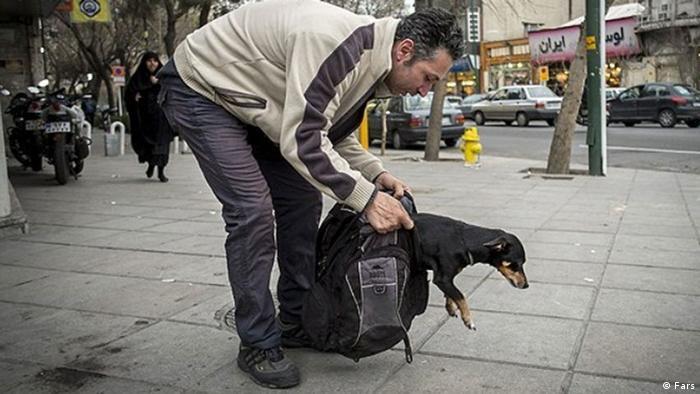 آیا سگها باعث سلامتی صاحبانشان میشوند؟