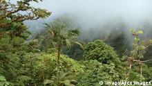 Bildnummer: 55694748 Datum: 01.01.2011 Copyright: imago/ARCO IMAGES Biologisches Nebelwald-Reservat Monteverde, Nationalpark Monteverde, Costa Rica Tropischer Regenwald