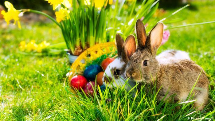 Por qu los conejos ponen huevos en pascua sociedad for El conejo de pascua
