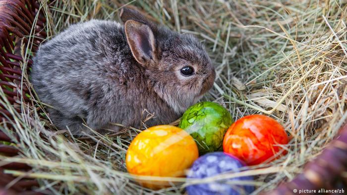 Symbolbild Ostern Osterhase Kaninchen Eier Ostereier