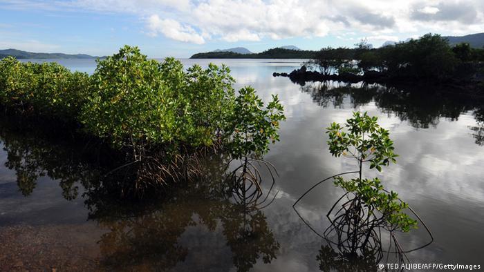 Bildergalerie Bäume Mangroven