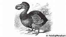 Dodo Illustration (Fotolia/Morphart)